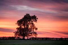 high flenders (D Cation) Tags: scotland glasgow clarkston flendersfarm highflendersroad ashtree gloaming silhouette