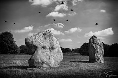 Avebury ancient stone monument (Daz Smith) Tags: dazsmith canon6d bw blackwhite blackandwhite bath city streetphotography people candid canon portrait citylife thecity urban streets uk monochrome blancoynegr avebury ancient stone monument circle birds