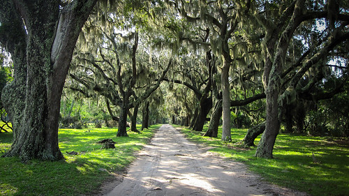 The trees on Cumberland Island