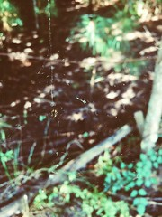 In The Maze (sonicimac) Tags: navigating web webs animals wildlife exploring woods adventure wonder life maze peaceful surreal nature spider