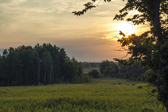 Good Morning !! (KMG Pictures) Tags: landscape sunrise sun field outdoors meadow tree summer morning durham clouds sky