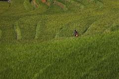 Arrozal (agustn hdez) Tags: vietnam hmong