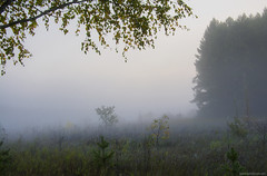 fog (www.eurodomen.com) Tags: morning wood field    evening tree outdoor autumn siberia dream forest green leaves nature mystery fog