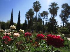 Bagh-e Eram Garden of Paradise Park Shiraz Fars Centr