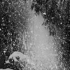 snow fall out (wolfgangfoto) Tags: winter blackandwhite bw snow bamboo fallout wolfgangfoto