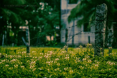 Bunch of flowers...!!! (HareshKannan) Tags: flowers flower stone fence nikon dusk thorn 55200mm d3100
