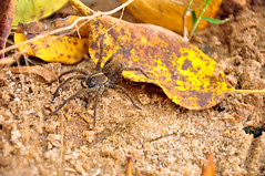 Spider In The Woods (BlakeLewisPhotography) Tags: old city bridge trees sunset sunlight mountain lake cold color fall oklahoma up leaves birds zoo leaf amazing bed meerkat woods state spiders capital great lakes parks peacock pelican 66 route exotic changing change dried plains beetles benches range owls migrating