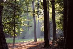 . (CarloAlessioCozzolino) Tags: trees alberi forest harukimurakami bosco monza parcodimonza the4elements monzaebrianza kafkasullaspiaggia