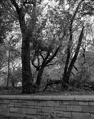 Hurricane Sandy (d.lei) Tags: 120 iso400 6x7 unionsquare kodaktmax400 d7611 pentax67ii smcpentax6755mmf4 hurricanesandy 30october2012