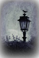 Ah@ christmas is coming... (Love me tender .**..*) Tags: christmas november blackandwhite birds photoshop photography outdoor greece automn lanterns blackwhitephotos palaiofaliro nikond3100