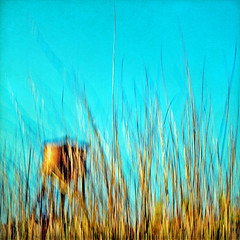 for tender grass, so fresh, so sweet (1crzqbn **away**) Tags: blue sunlight motion blur color grass square shadows bokeh teal watertower textures 7d pdx icm vividimagination artdigital trolled intentionalcameramovement awardtree magicunicornverybest crazygeniuses exoticimage 1crzqbn netartii fortendergrasssofreshsosweet