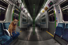 """Tube Dawg • <a style=""""font-size:0.8em;"""" href=""""http://www.flickr.com/photos/76512404@N00/8209834815/"""" target=""""_blank"""">View on Flickr</a>"""