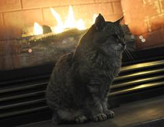 Kitty at Hotel (Spenser.Cat) Tags: kat gato gatto katz katzen purr feline meow