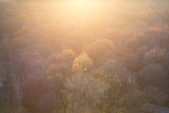 into the light (lenslet) Tags: park sunset tree berlin germany eos5d3 ef2470mmf28liiusm