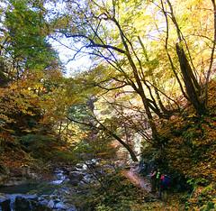 IMG_9792-IMG_9793 (youkaine) Tags: november autumn red orange mountain yellow japan forest river waterfall hiking autumncolors foliage 日本 紅葉 秋 山 yamanashi 11月 川 ハイキング 山梨 nishizawakeikoku 葉っぱ 山梨県