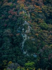 PhoTones Works #2172 (TAKUMA KIMURA) Tags: autumn mountain plant nature leaves set high maple scenery     autumnal   omd density kimura  takuma    em5  photones