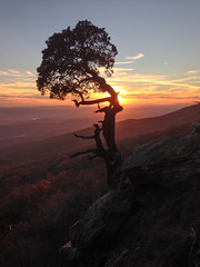 Magazine Sunset (jball359) Tags: statepark sunset tree fall silhouette wizard arkansas mtmagazine iphone5 iphoneography weatheredcedar mygearandme mygearandmepremium mygearandmebronze mygearandmesilver mygearandmegold