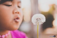 Make a wish, Joyce! (//ZERO) Tags: flowers flower sandiego dandelion imperialbeach makeawish dandelionclock canonef50mmf25compactmacro worldflower worldflowers dandeliontuft