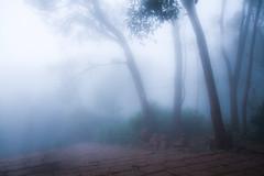 Fog in Mahabaleshwar - IMG_6172B&WB&W (Swaranjeet) Tags: mahabaleshwar india nature landscape trees mist swaranjeet sjs photos swaran swaranjeetsingh sjsvision sjsphotography swaranjeetphotography 2012 hindustan bharatvarsh indie canon eos7d apsc mumbai mmr financial capital