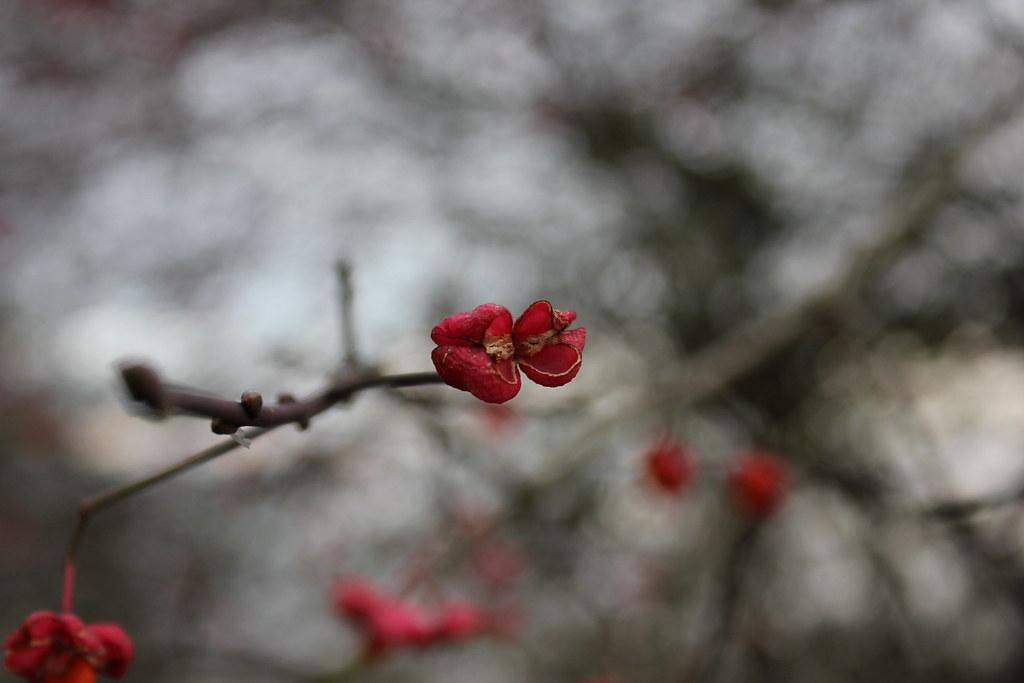 rose garden malmö