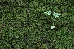 Fragilit - Fragility (Carlo Columba) Tags: parco tree verde green nature alberi ilovenature moss italia natura it sicily environment palermo muschio sicilia bosco ambiente vegetazione ficuzza