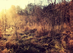Untitled (Matt Morey) Tags: morning trees light sun mist landscape haze frost frosty autumnal