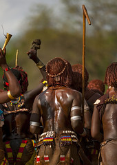 Hamer Tribe Women Dancing During Bull Jumping Ceremony, Turmi, Omo Valley, Ethiopia (Eric Lafforgue) Tags: africa people haircut color leather vertical outside photography togetherness cow pain community colorful day outdoor performance ceremony culture jewelry skirt tribal bull celebration ornament whip omovalley rearview tradition ethiopia tribe pastoral ethnic wound hairstyle rite groupofpeople hamar bodymodification jewel hamer traditionalculture hornofafrica ethnology omo eastafrica animalskin physicalinjury braidedhair traditionalclothing realpeople colorimage beautify tribeswoman whippingceremony waistup redochre turmi africanethnicity pastoralist pastoralism semidress bullleaping snnpr bulljumping bodytransformation southernnationsnationalitiesandpeoplesregion hamerbenaworeda ethiopianethnicity hamerbena hammerbena eth83502