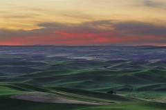 _MDG6776 (NikonDigifan) Tags: sunset washington dusk explore agriculture palouse easternwashington palousehills steptoebutte inlandnorthwest