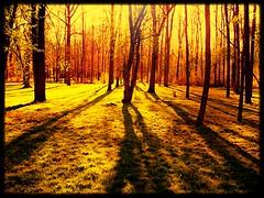 Autumn dream (Piglet1955) Tags: trees light sun ontario yellow rural forest landscape dreamy ochre iamcanadian worldtrekker spiritofphotography flickunitedaward me2youphotographylevel2 me2youphotographylevel3 me2youphotographylevel1 me2youphotographylevel4 flickrclickxaward