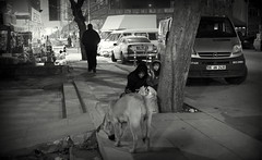 Untitlet (ahmetgm) Tags: street bw fujifilm poorpeople x100