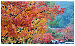 20121126_6802d_ (Redhat/) Tags: autumn fall japan temple maple kyoto redhat           eikando