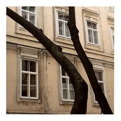 Tree Trunks (ngbrx) Tags: vienna wien city trees house building tree austria sterreich haus stadt trunks bume gebude fassade