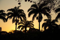 Yellow (marcus_lahr) Tags: americana sopaulo brazil br sunset yellow shadow palmeiraimperial