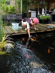 DSCF2264 (ronaldzijlstra2) Tags: kid son boy dog cairnterrier koi vis vish vijver pond