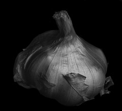 Garlic Shapes And Shadows (Bill Gracey) Tags: silverefexpro blackbackground blackandwhite blancoynegro noiretblanc highcontrast shapes shadows sidelighting yn560iii yongnuorf603n softbox filllight garlic food stilllife shadowshapes