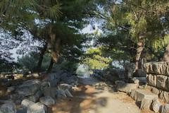 Exploring! (illetyus / Instagram @illetyus09) Tags: green road greek priene ske aydn turkey atakan illetyus illetyus09 ancient