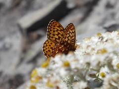 butterfly luminex this one (Karen Molenaar Terrell) Tags: northcascades trail hike tablemountain