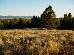 Teton golden hour. (Ethan Cheng) Tags: trees grandtetonnationalpark epl7 olympus dusk mzuikodigital25mmf18 wyoming grandtetonnp pen penlite