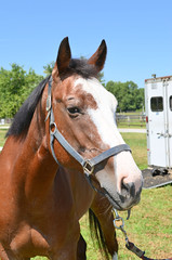 2016-08-28 (9) Miss Nicole arrives at 'horse show' (JLeeFleenor) Tags: photos photography md maryland horseshow gambrills horses thoroughbreds equine equestrian cheval cavalo cavallo cavall caballo pferd paard perd hevonen hest hestur cal kon konj beygir capall ceffyl cuddy yarraman faras alogo soos kuda uma pfeerd koin    hst     ko