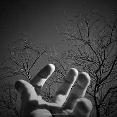 Tree / Fingers (2) (aus.photo) Tags: ausphoto australia australiancapitalterritory act canberra cbr deakin lefthand hand thumb finger fingers deciduous tree deciduoustree leafless leaflesstree branches clearday bluesky bw blackandwhite blackwhite monochrome vignette outdoors outside