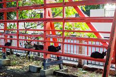 Today's Cat@2016-08-17 (masatsu) Tags: cat catspotting thebiggestgroupwithonlycats pentax mx1