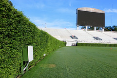 IMG_9706 (UGA College of Ag & Environmental Sciences - OCCS) Tags: sanfordstadium tif419 2016 football turfgrass grass tiff419 419 privet hedge hedges scoreboard
