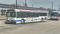 Brampton Transit #0432 (BramptonTransitFan84) Tags: bramptontransit toronto newflyer d40lf