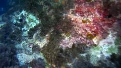 Una de las Cuevas del Francs (AAcero) Tags: almeria cabodegata buceo burros sj5000 diving almera isub