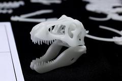 IMG_6863 (Barman76) Tags: bonelab trex tyrannosaur skeleton plastic laser cut