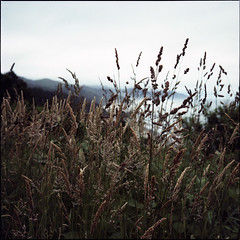 Oregon Coast (andrewkaiserphoto) Tags: landscape oregon mamiya c330 tlr nature pacificnorthwest andrewkaiser mediumformat 120 6x6 believeinfilm colorfilm c41