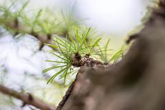 DSC01063.jpg (chagendo) Tags: pflanze makro makrofotografie sonyalpha7ii 90m28g outdoor