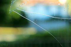(CaledoniaEHanson) Tags: window glass cracks abandoned