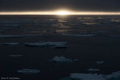 Ice and fire (Elvar H) Tags: arcticocean helmerhansen siarctic birds ice iceedge
