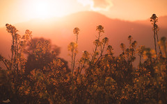 Indian Summer (VandenBerge Photography) Tags: nature landscape lonelyplanet switzerland schweiz thebeautyofnature thun flowers flora mountains sunset warm mood light red sky indiansummer ef100mmf28lmacroisusm canon cantonberne europe autumn